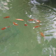 The fishes at The Gardens