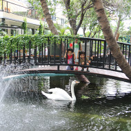 Kids Feeding the Swans at The Gardens